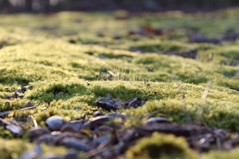 Mit Gründächern lassen sich ohne viel Aufwand versiegelte Flächen in ein kleines Biotop verwandeln.